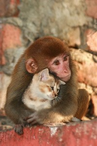 monkey hugging cat