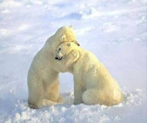 polar_bears_hug