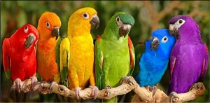 ColorfulBirds