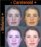 caratenoid over suntan four women