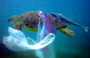 plastic in turtle