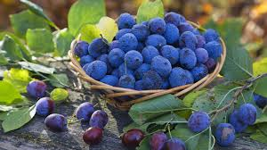 blueberries in basket and leaves